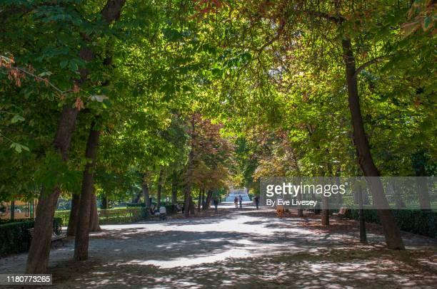cuba promenade - paseo de cuba - avenue stock pictures, royalty-free photos & images