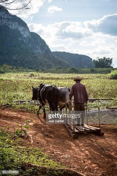 cuban farmer near viñales, cuba - valle de vinales stock photos and pictures