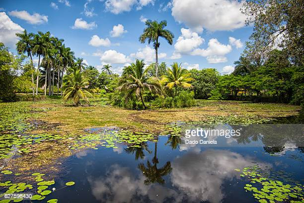 cuban jungle - varadero beach stock pictures, royalty-free photos & images