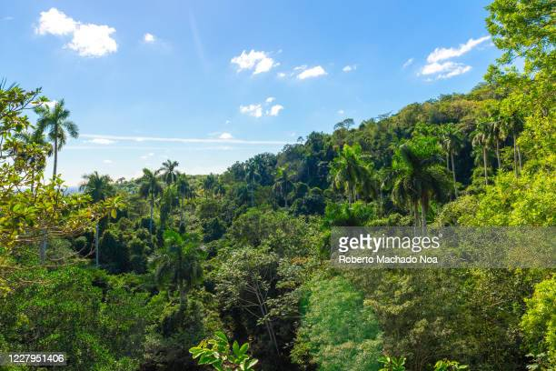 Cuban landscape with lush foliage in the nature reserve and eco-tourism parkland named 'Soroa'.