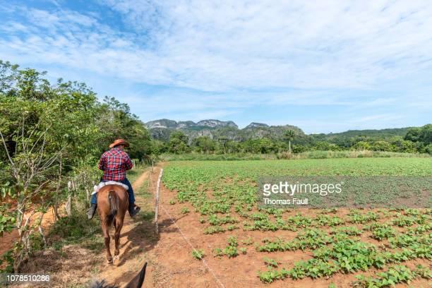 cuban man rides a horse through the vinales valley, cuba - valle de vinales stock photos and pictures