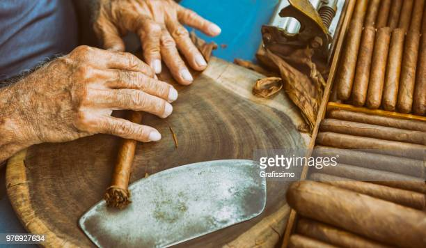 cuban old man manufacturing cigar with tabacco leaves - cuba foto e immagini stock