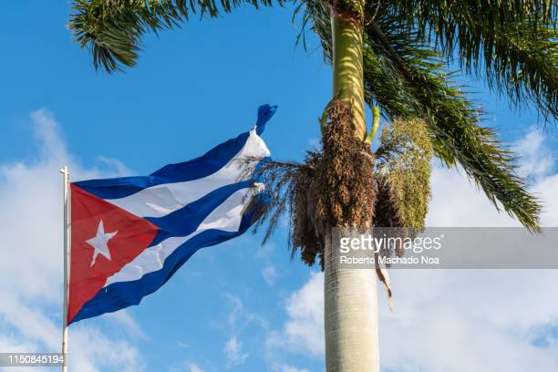 cuban symbols, the national flag and a royal palm tree - cuban flag stock pictures, royalty-free photos & images