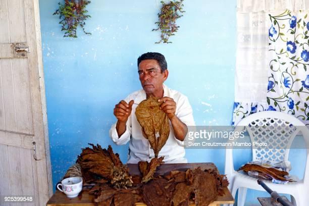 Cuban tobacco worker Justo Concepcion rolls cigars at the Isidro Garcia cooperative in the Western province of Pinar del Rio in San Juan y Martinez...