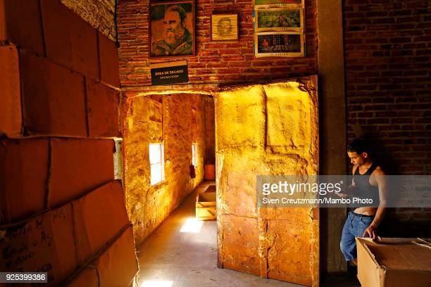 Cuban worker looks at his cellphone under an image of late Revolution leader Fidel Castro at a Despalillo factory in the Western province of Pinar...