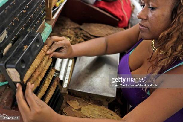 Cuban worker rolls cigars at the H Upmann tobacco factory during the annual Habanos tobacco festival on March 1 in Havana Cuba The festival will...