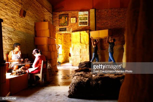Cuban workers carry a box with dried tobacco leaves under the image of late Revolution leader Fidel Castro at a Despalillo factory in the Western...