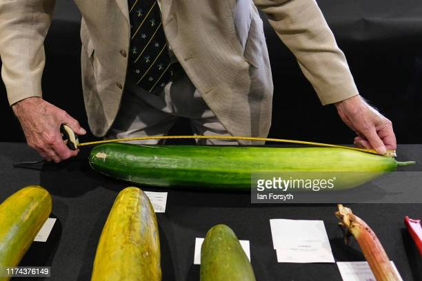 Cucumbers are measured during judging for the giant vegetable competition at the Harrogate Autumn Flower Show on September 13 2019 in Harrogate...
