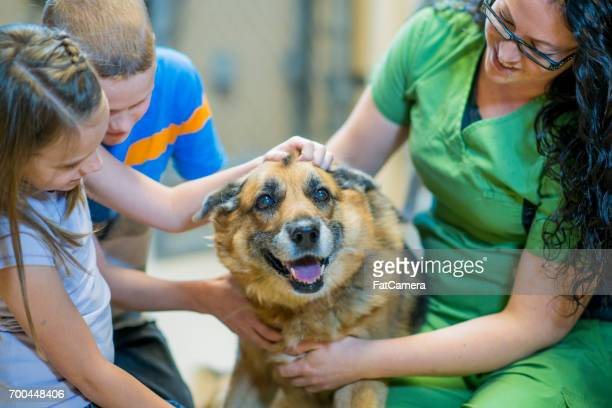 cuddly dog - rescue stock pictures, royalty-free photos & images