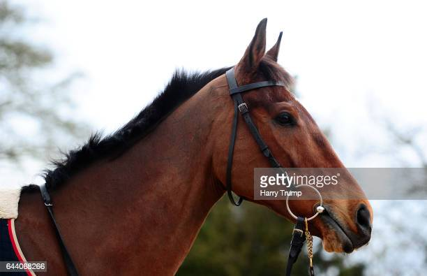 Cue Card looks on during a Colin Tizzard Stable Visit at Spurles Farm on February 23 2017 in Sherborne United Kingdom