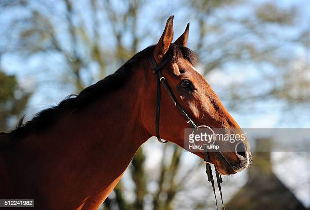Cue Card poses at Spurles Farm on February 25 2016 in Sherborne England