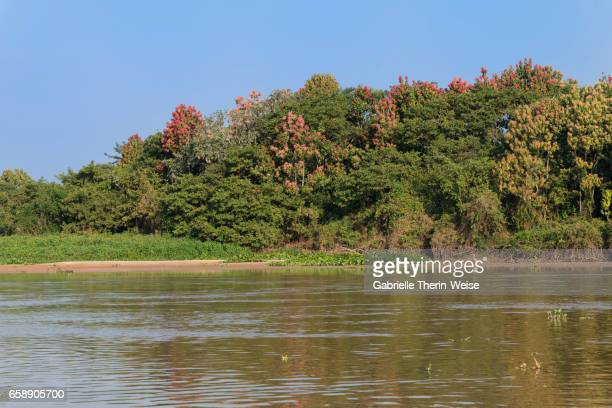 cuiaba river - cuiaba river stock photos and pictures