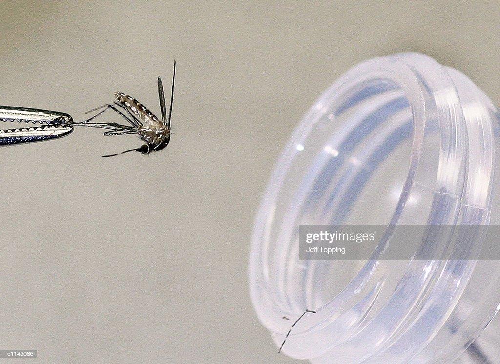 Arizona Officials Battle West Nile Virus : News Photo
