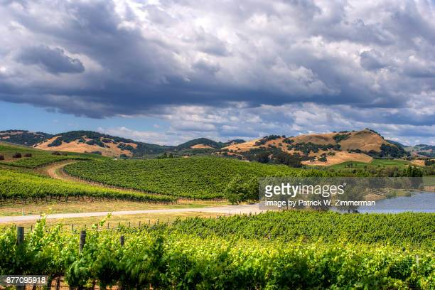 culmulus clouds over vineyard - napa valley stock pictures, royalty-free photos & images