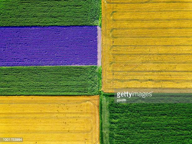 cultivated farm land - crop stock pictures, royalty-free photos & images
