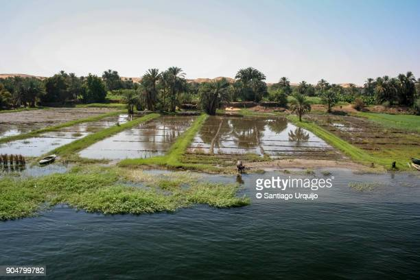 Cultivated fields alongside the Nile River