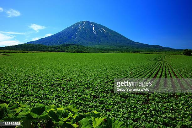 Cultivated fields and Mount Yotei, Hokkaido