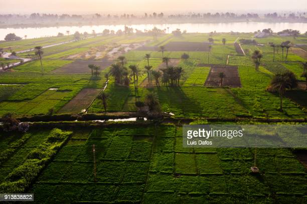 cultivated fields by the nile at sunset - north africa stock photos and pictures