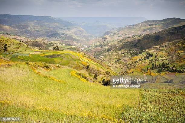 Cultivated fields in the Ethiopian Highlands