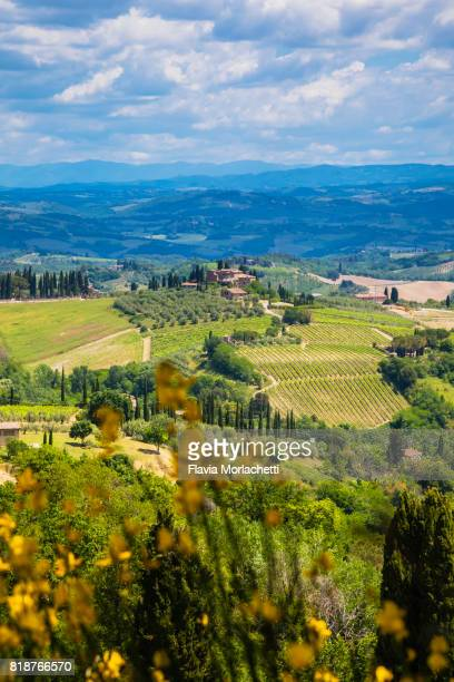 cultivated fields in tuscany - サンジミニャーノ ストックフォトと画像