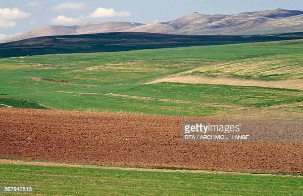 Cultivated fields near Bogazliyan Central Anatolia Turchia