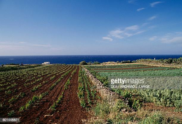 Cultivated fields Ustica island Sicily Italy