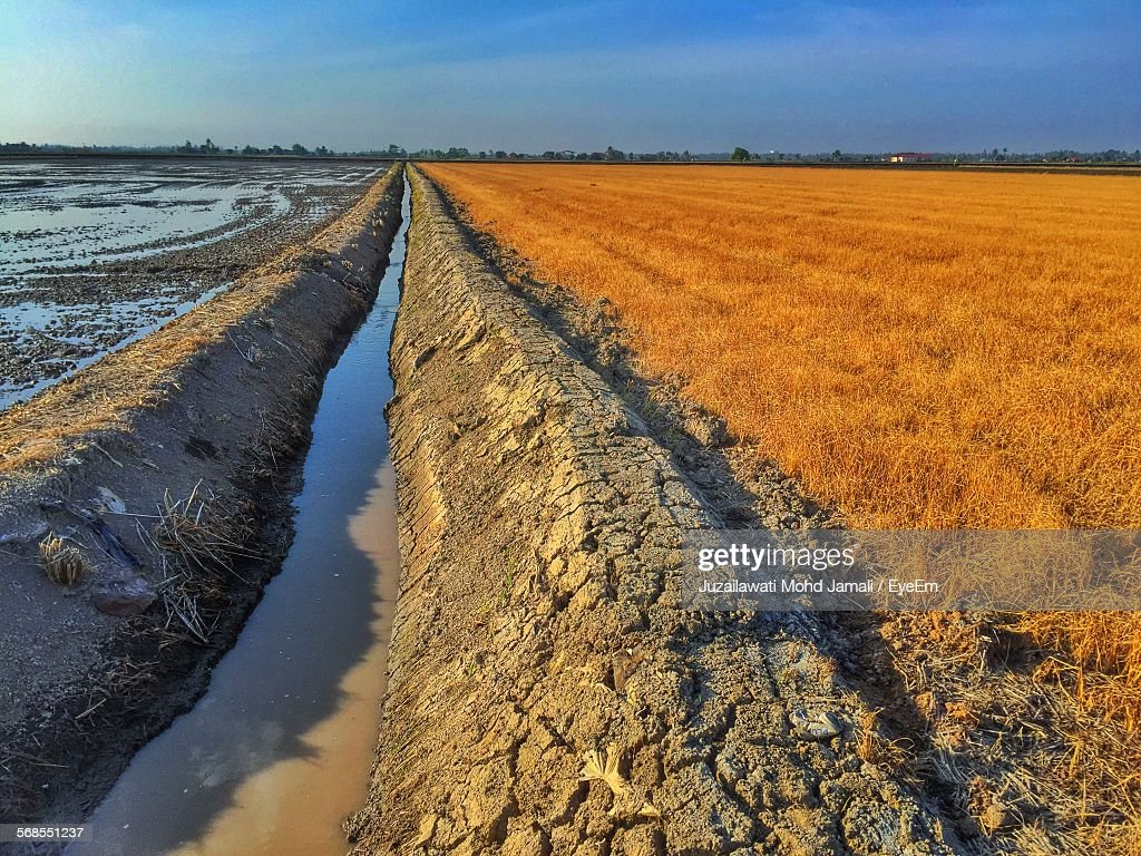 Cultivated Paddy Field By Irrigation Canal Against Sky : Stock Photo