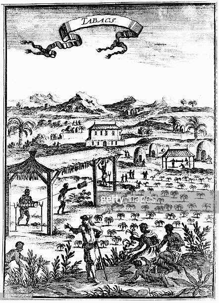 Cultivating and curing tobacco in West Indies using slave labour 1686