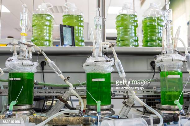 Cultivation of algae on a laboratory