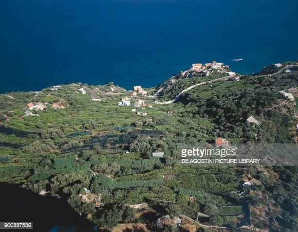 Cultivation of lemon trees and vineyards near Ravello Amalfi Coast Campania Italy