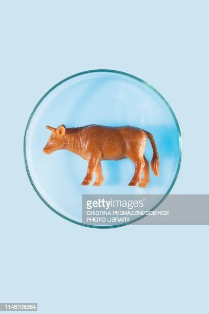cultured meat, conceptual image - imitation stock pictures, royalty-free photos & images