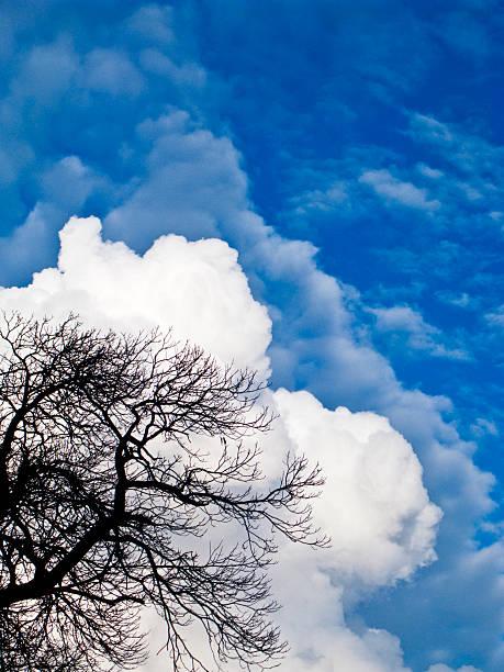 cumulo nimbus clouds and tree fine art prints photos com