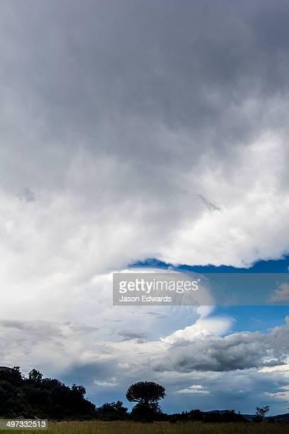 A cumulonimbus cloud forming over a Candelabra Tree on the savannah.