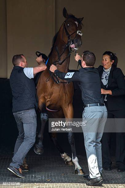 Cunco the first offspring of the champion racehorse Frankel to appear on a racecourse causes trouble while being saddled before winning Division II...