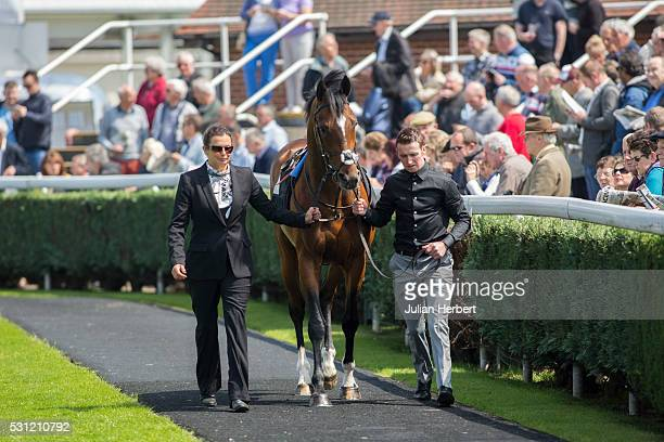 Cunco the first offspring of the champion racehorse Frankel to appear on a racecourse is lead round the parade ring by traveling head girl Anneli...