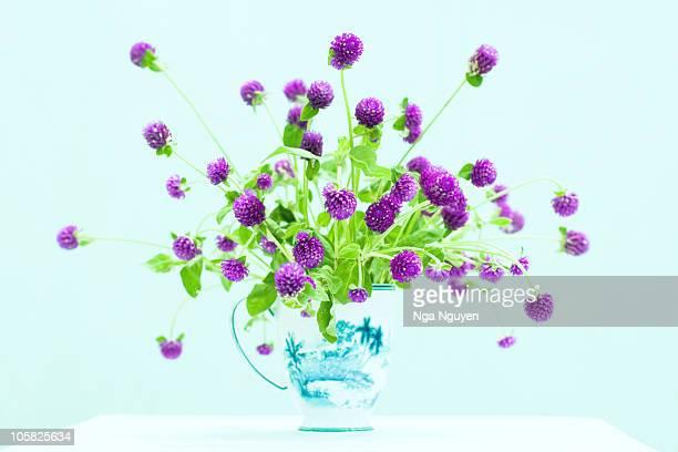 A cup of purple globe amaranth flower