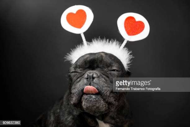 cupid dog - funny cupid stock pictures, royalty-free photos & images