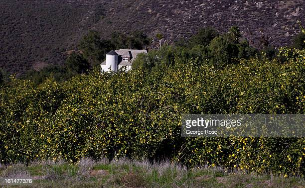 Cupid's Castle in the Rincon Valley sits in a lemon grove on January 4 2013 near Escondido California The interior region north and east of San Diego...