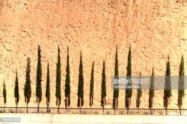 cupressus sempervirens in andalusia, spain - italian cypress stock photos and pictures