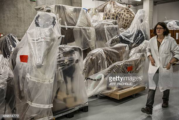 A curator walk past on a collection wrapped in plastic in a storeroom at the 'Musee des Confluences' science centre and anthropology museum ahead of...