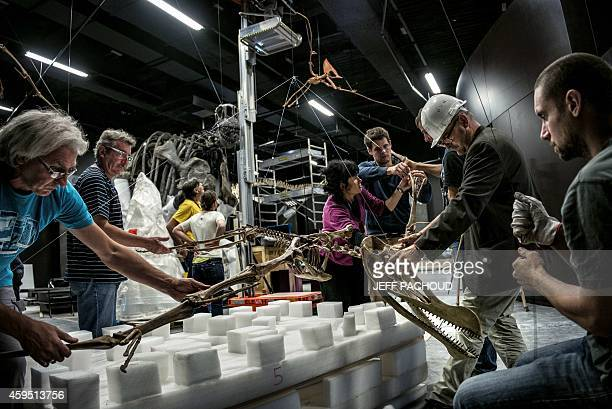 "Curators prepare to install a pterosaur skeleton as part of a permanent collection on dinosaurs in an exhibition room at the ""Musee des Confluences""..."