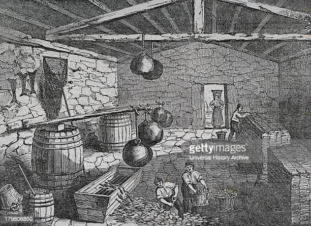 Curing pilchardsCornwall England 1833