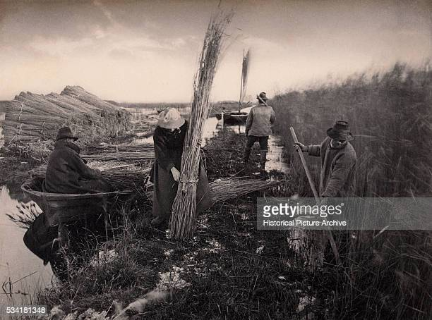Curing the Reed Harvest by Peter Henry Emerson