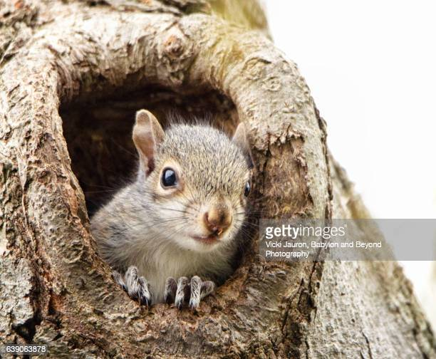 Curious Baby Squirrel Pokes His Head out of Tree