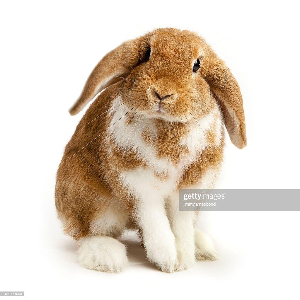 Curious Bunny : Stock Photo