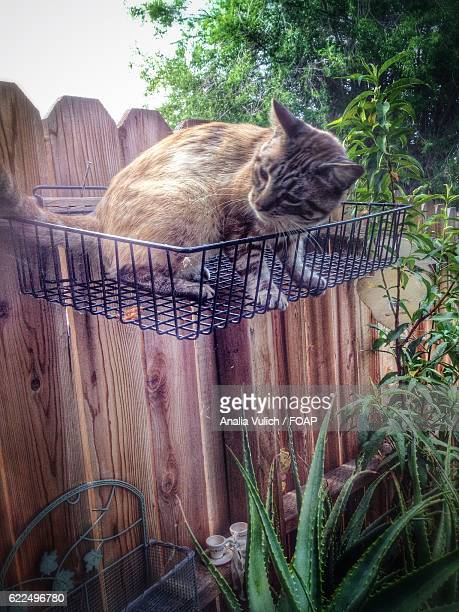 Curious cat on metal crate