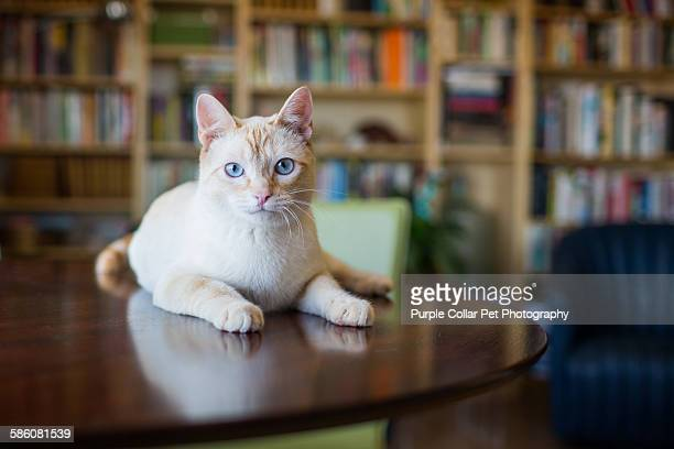 curious cat on table indoors - 後ろボケ ストックフォトと画像