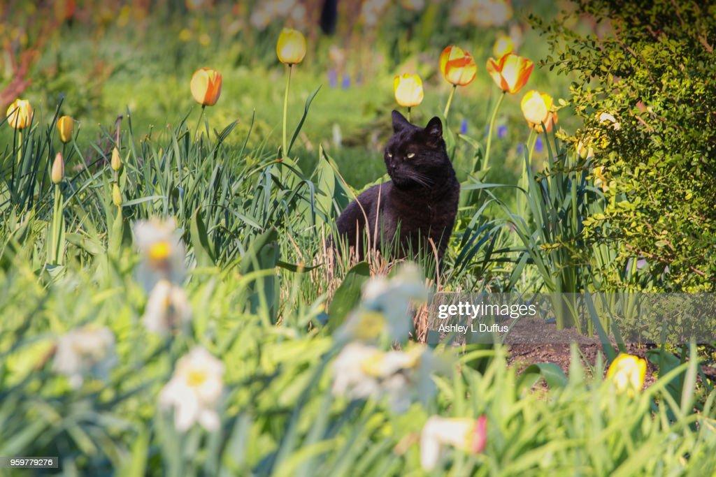 Curious Cat : Stock Photo