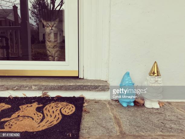 curious cat with gnome statues - garden gnome stock photos and pictures