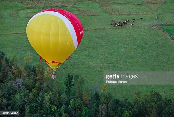 CONTENT] Curious cows watch a hot air balloon from the Gatineau Hot Air Balloon Festival